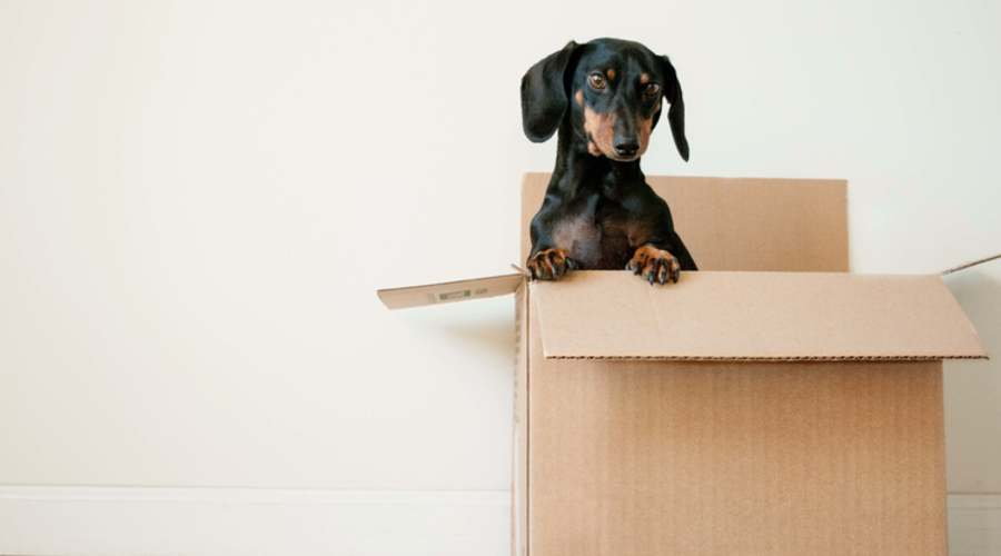 moving-home-business